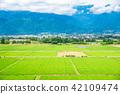 azumino city, summer, rural scene 42109474