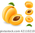 apricot, fruit, vector 42110210