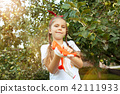 The happy young girl during picking apples in a garden outdoors 42111933