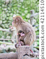 Japanese monkey parent and child 42114510