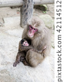 Japanese monkey parent and child 42114512
