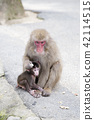 Japanese monkey parent and child 42114515