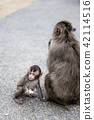 Japanese monkey parent and child 42114516
