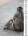 Japanese monkey parent and child 42114518