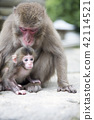 Japanese monkey parent and child 42114521