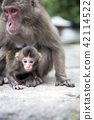 Japanese monkey parent and child 42114522