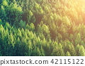 forest, landscape, scenery 42115122