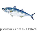 鯖魚 魚 白色背景 42119626