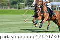 horse speed in polo match 42120730