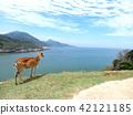 台灣馬山北極奧島Shima Hanaoka,一個神社風景距離。 42121185