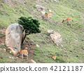 台灣馬漢北極奧島Shima Hanaoka,一群Deer Electricity Gakusho。 42121187
