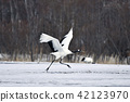 crane, red-crowned crane, flight 42123970