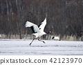 นก,สัตว์,ภาพวาดมือ สัตว์ 42123970