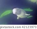 วาฬ,มหาสมุทร,ธรรมชาติ 42123973