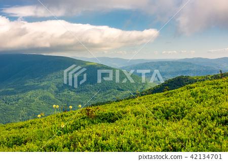 grassy hillside on mountain in summer 42134701