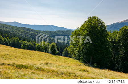 meadow on the forested hill in summer mountain 42134716