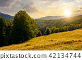 meadow on the forested hill in mountain at sunset 42134744