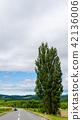 켄과 메리의 나무 비 에이 42136006