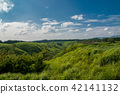 grass, field, grassland 42141132