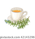 rosemary tea illustration 42143296