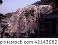 sanneizaka slope, weeping cherry, sannenzaka 42143962
