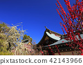 yuuki shrine, weeping japanese apricot, weeping plum 42143966