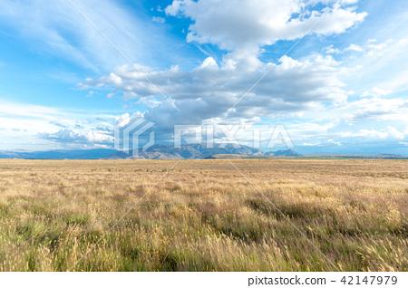 廣泛的新西蘭風景 42147979