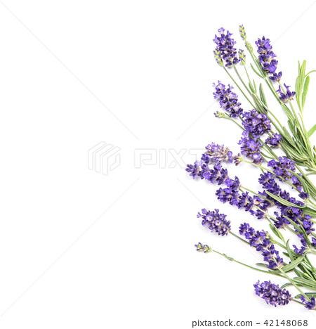 Lavender flowers white background floral border stock photo lavender flowers white background floral border mightylinksfo