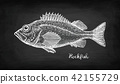Chalk sketch of rockfish. 42155729