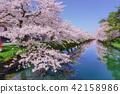 히로사키 공원의 벚꽃 Hirosaki park 42158986