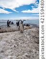 Jackass penguins roaming freely along the coast.  42159480