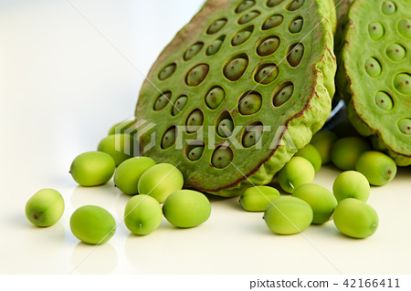 lotus seed close up 42166411