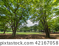 สวน,สวนสาธารณะ,พืชสีเขียว 42167058