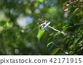 horsefly, promachus yesonicu, gadfly 42171915