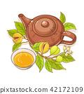 nutmeg, vector, illustration 42172109