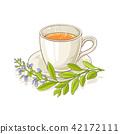sage tea illustration 42172111