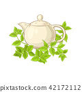 vector, peppermint, tea 42172112