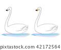 天鵝 鳥兒 鳥 42172564