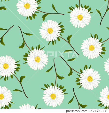 White Aster, Daisy on Green Background 42173974