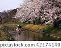 riverside tour, cherry blossom, cherry tree 42174140