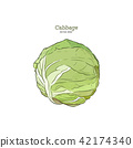Hand drawn sketch style set of cabbages. 42174340