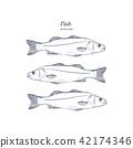 Hand Drawn Illustrations of fish. 42174346