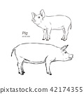 Vector illustration of pig in graphic style. 42174355