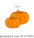 Vector hand drawn set illustration of pumpkin. 42174363