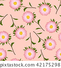 Pink Aster, Daisy on Pink Background 42175298