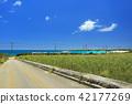 在沖繩甘蔗田和藍海和滑翔傘在海灘上的Irabujima風景 42177269