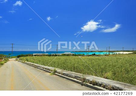 오키나와 이라부 섬의 풍경 사탕 수수밭과 渡口의 바닷가 푸른 바다와 패러 글라이딩 42177269