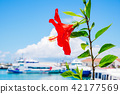 芙蓉和石垣港群島碼頭(石垣島/沖繩縣) 42177569