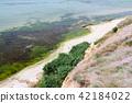 Algae seaweed on the seashore near the cliff.  42184022