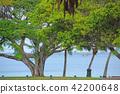 新喀裡多尼亞 海灘 棕櫚樹 42200648